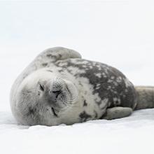 北極スマイル・南極スマイル カレンダー 2020 5月