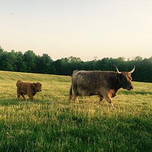 farm, animals, farming