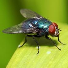 Amazon.com: Terro - Trampa para avispas y moscas, Paquete de ...