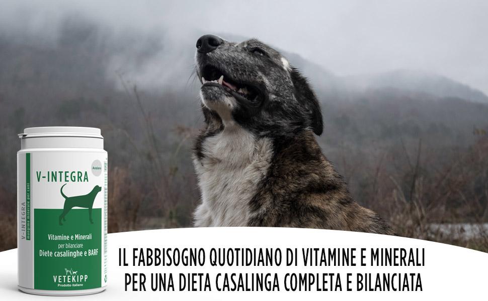 dieta per cani anziani
