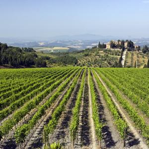 Frescobaldi - Toscana