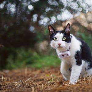 collare gps gatto