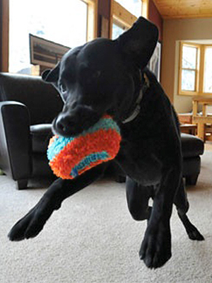 interactive dog toys, dog toys for large dogs, dog toys for small dogs, dog toys for boredom,