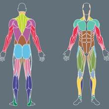 Fitnessübungen, Beweglichkeit verbessern, Ratgeber Fitness, Faszientraining, Dehnübungen