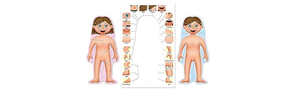 Educa Borrás- Cuerpo Humano Puzzle Educativo, Multicolor