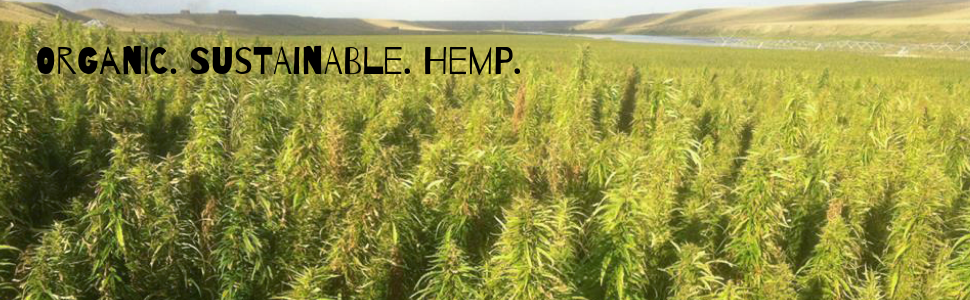 organic hemp field sustainable
