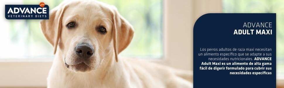 ADVANCE Adult Maxi - Pienso Para Perros Adultos De Razas Grandes Con Pollo - 14 kg