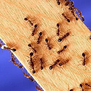 Amazon Com Terro T401sr Ant Killer Spray 2 Pack White Garden Outdoor
