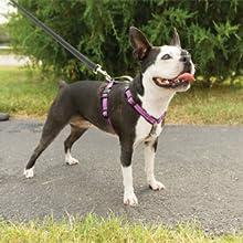 dog harness no pull leash collar chest