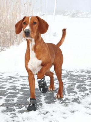 Hundskor, natur, hund