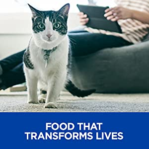 food that transforms lives