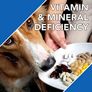 absolute,absolute vitamin,drools,supplement for dogs,vitamins for dogs,vitamins