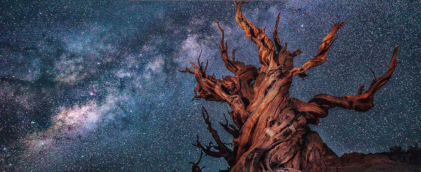 QLED TV with scene of a tree against a starry night sky
