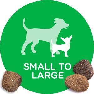 Small Breed Dog, Large Breed Dog, Small Dog, Large Dog, Tiny Dog, Toy Breed, Medium Breed