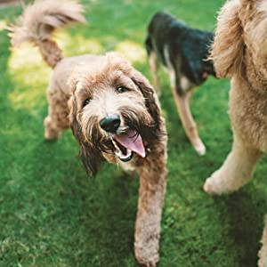 dog playing, happy dog, goldendoodle, healthy pet, hydrated pet, water for dogs, filtered water