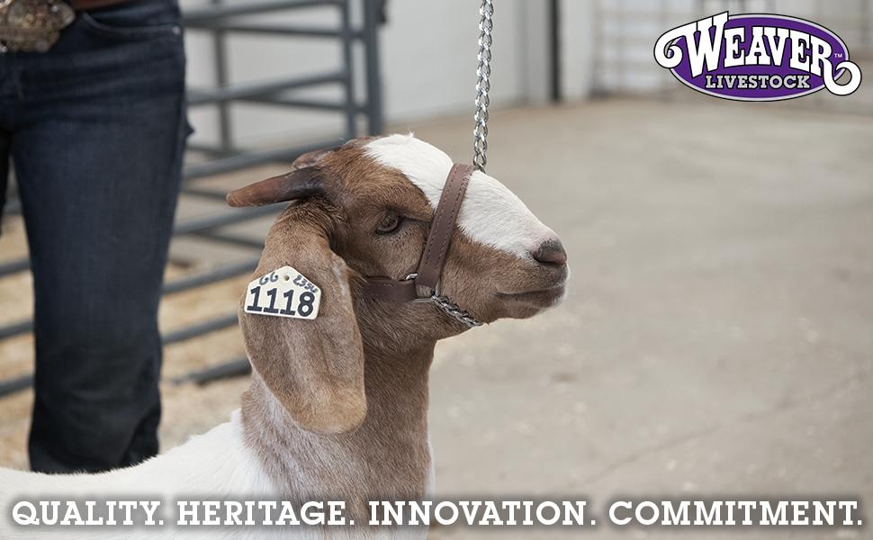 Goat Halter