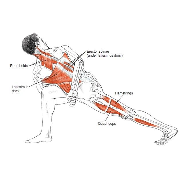Yoga Anatomy: Leslie Kaminoff, Amy Matthews: 0783324853148 ...