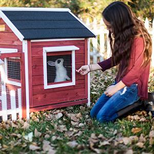 Amazon Com Advantek The White Picket Fence Rabbit Hutch