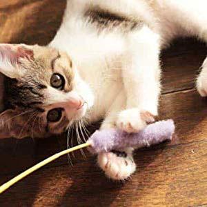 ペティオ (Petio) 猫用おもちゃ けりぐるみ イカ