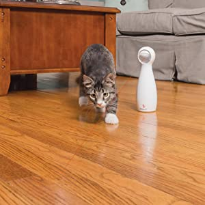 cat toy, laser toy, laser, cat, cat puzzle, pu
