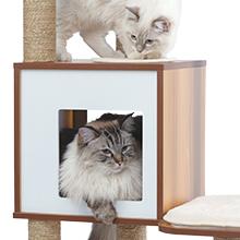 Cat in hideout