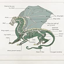 Anatomy,dragon anatomy,wings,tails,scales,claws,teeth