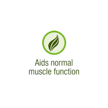Aids normal muscle function