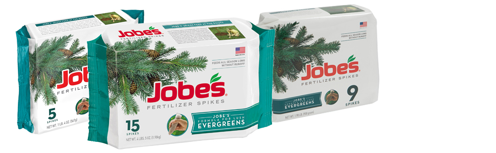 Evergreen Spikes