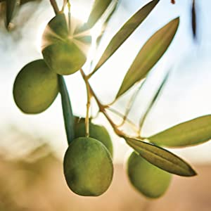 Musco Olives snacks healthy low fat low cholesterol