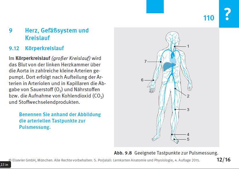 Nett Muskeln Spiele Für Anatomie Und Physiologie Ideen - Menschliche ...