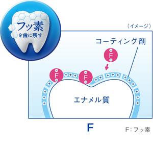 フッ素を歯に残す