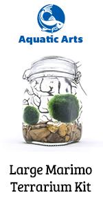marimo moss ball balls air plants succulent succulents decor house indoor terrarium plant