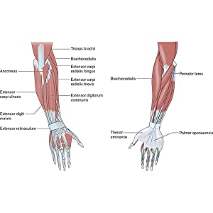 tennis elbow, sports massage, injury care