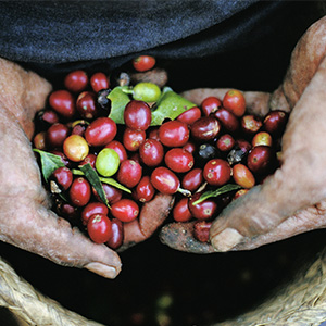 Harris coffee, coffee capsules, raw coffee, coffee beans, natural coffee