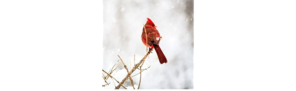 Amazoncom Window Alert Maple Leaf Decal Bird Window Alert - Bird window stickers amazon