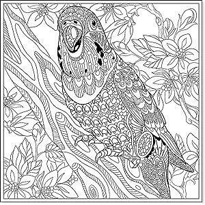 Malbuch Für Erwachsene Tropische Vogelmotive Zum Ausmalen