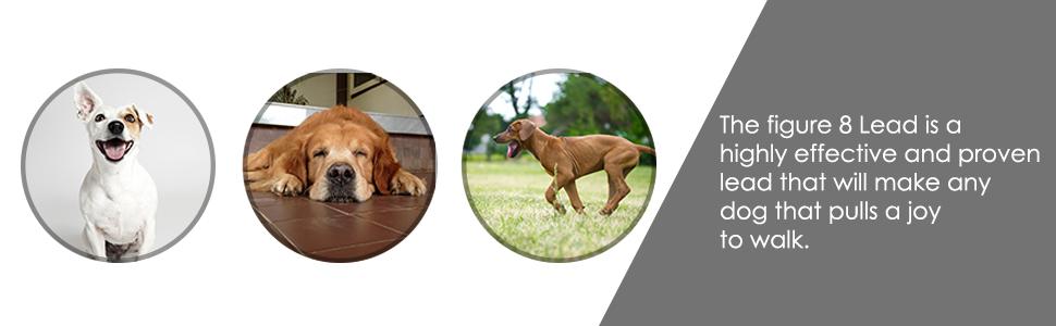 Dog & Field Figure 8 Anti Pull Lead