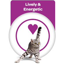 Energy for my cat
