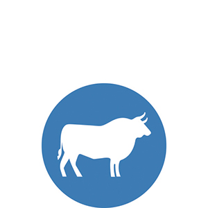 USA Sourced Beef dog food