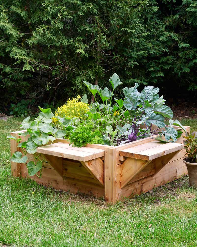 introduction what is the raised bed revolution - Raised Garden