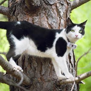 gps per gatti