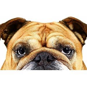 ブルドッグ ブルドック Bulldog 男性 スキンケア 洗顔料 フェイスウォッシュ 男性コスメ メンズコスメ 男性化粧品