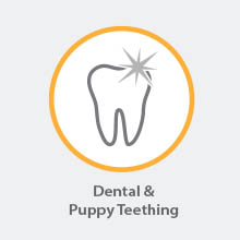 dental care and puppy teething
