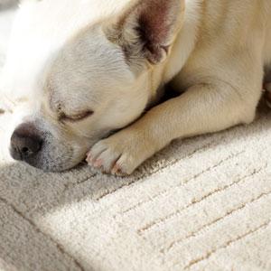 ふかふか お昼寝 dog cat rabbit