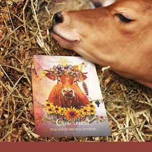 animal spirit oracle cards deck tarot beautiful archetypal symbolism universal intuitive