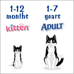 Image of when your cat is kitten and adult