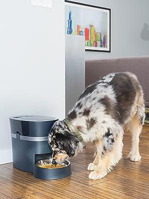 dog feeder;cat feeder automatic wifi;automatic cat feeder;dog slow feeder bowl;automatic dog feeder