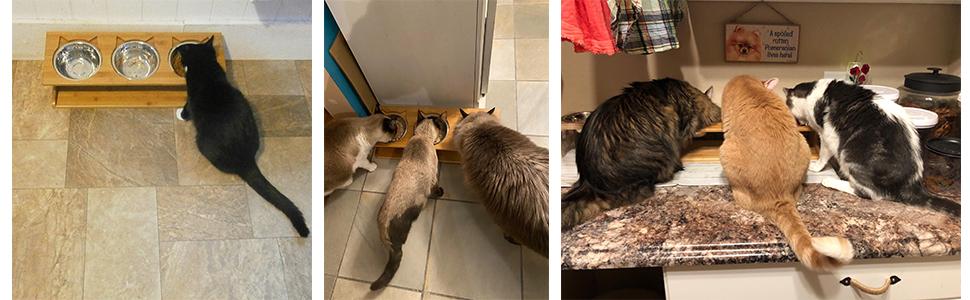 three bowls cat feeder