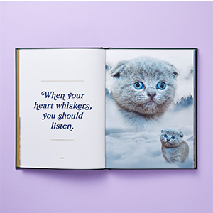 cat, cute, kitty, quote