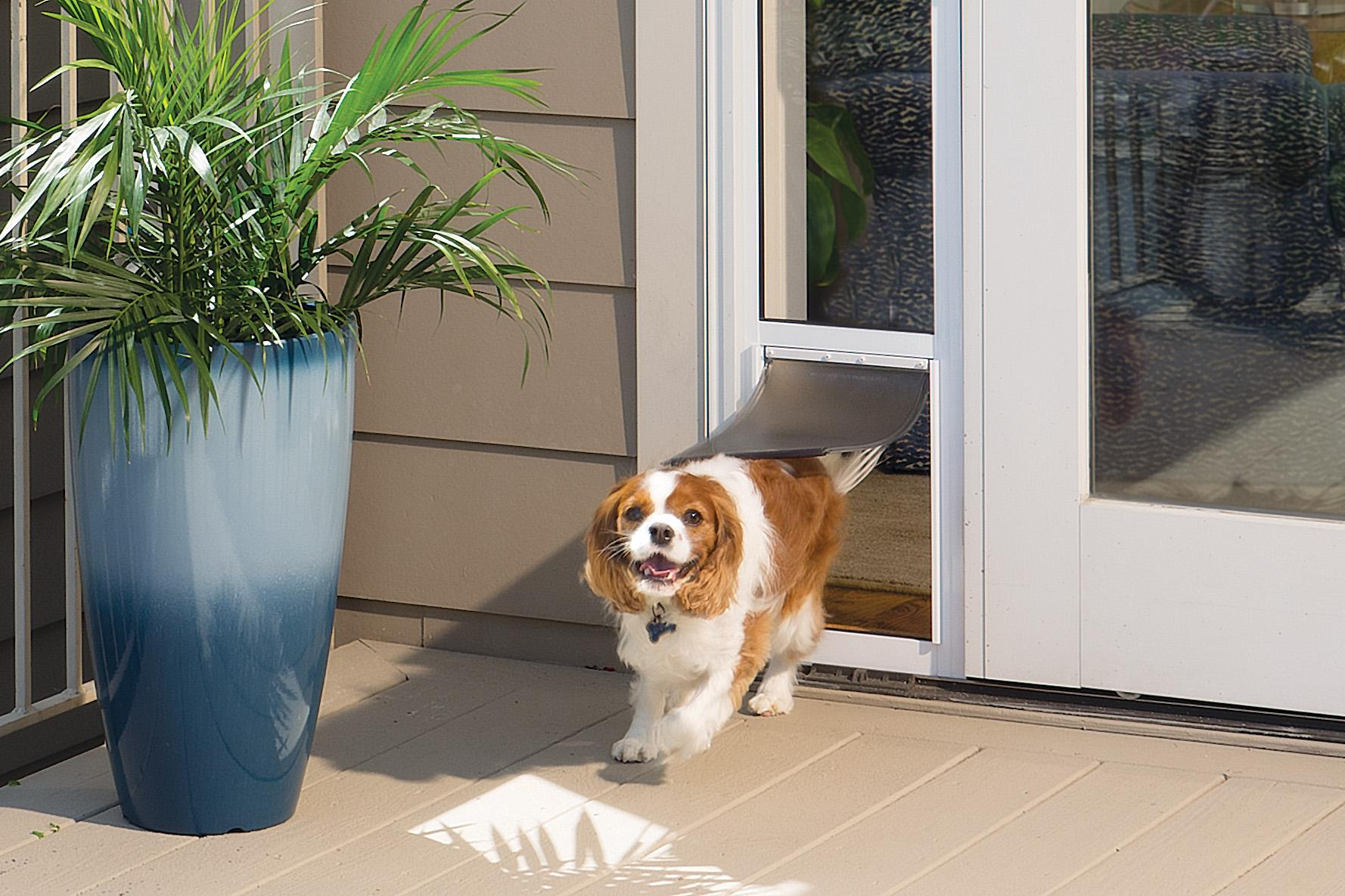 door dog dogs doggie doggy doors large ideal pet;electronic for sliding glass patio panel  sc 1 st  Amazon.com & Amazon.com : PetSafe 2-Piece Sliding Glass Pet Door Great for ...